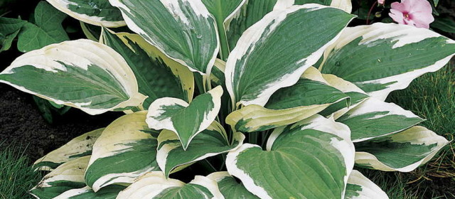 The Science of Plant Color