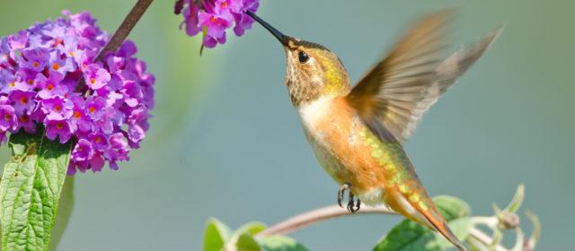 Turn your Garden into a Wildlife Habitat