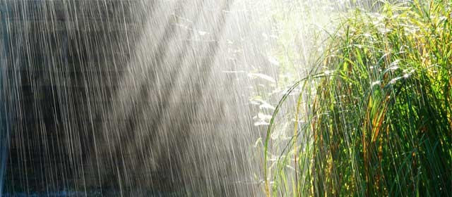 How to Handle Rain Part Two: Rain Gardens