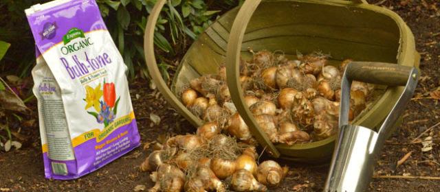 Wayside PR 10/27/14: Planting Bulbs—Dig, Drop, Done!