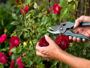Wayside PR: Spring Garden Clean-Up & Rose Pruning
