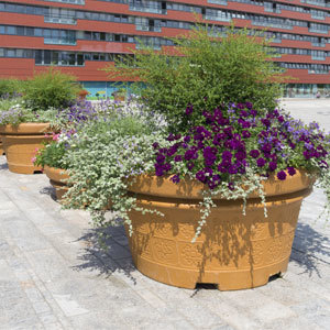 Outdoor Containers with Shrubs, Perennials, and Annuals