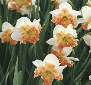 Our Bulbs are Famous!