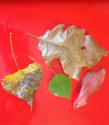 Everything You Ever Wanted to Know About Leaf Shapes