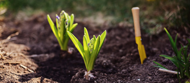 Garden Prep Checklist: 8 Things You Should Do By Spring