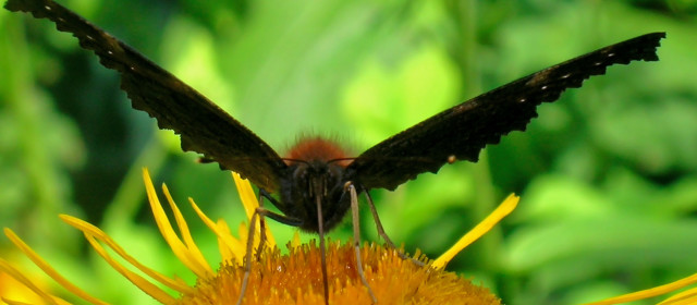 10 Weird Facts About Butterflies