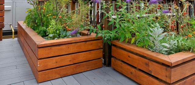 Raise a Rooftop Garden
