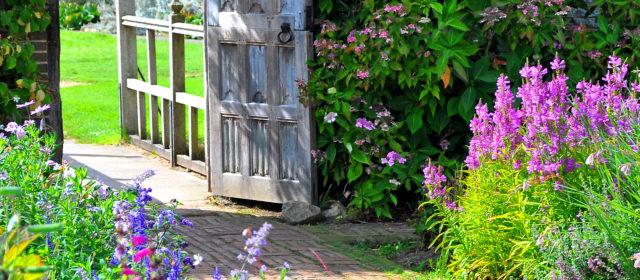 Creating a Sensory Garden