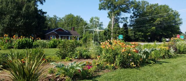 7 Reasons to Love Community Gardens